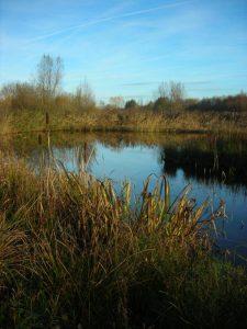 Wollerton Wetlands